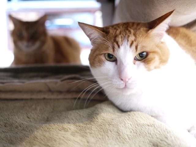 猫のお留守番 あずきくん編。_a0143140_23151538.jpg