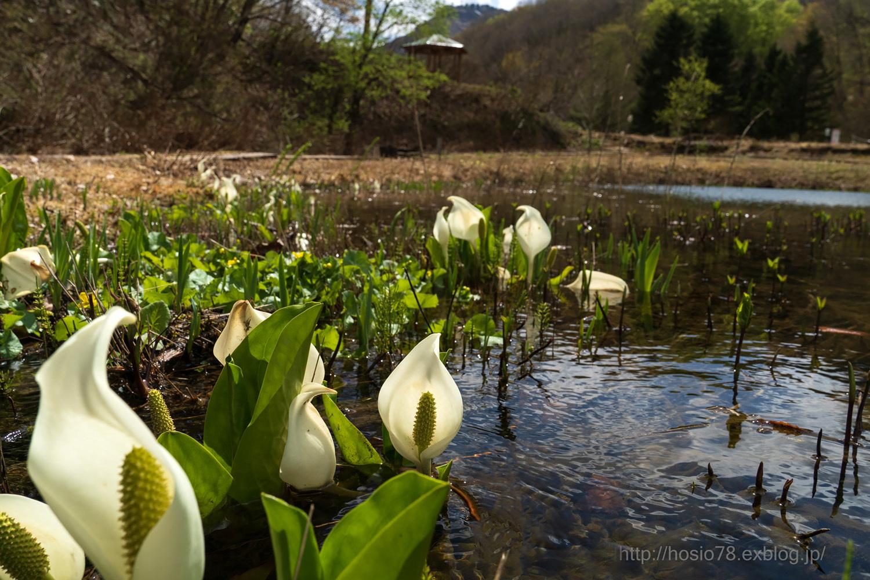 遅い湿原の春_e0214470_09430983.jpg