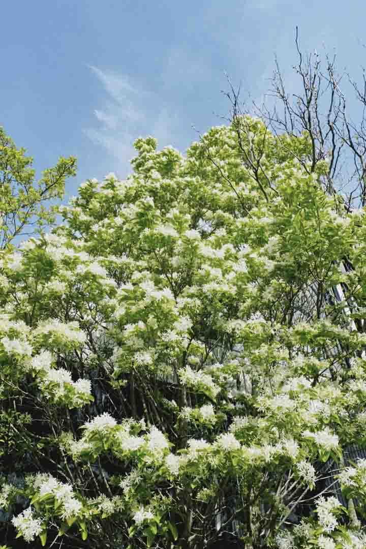 新緑を思わすみずみずしいネフライトのブレスレット_d0303974_19373435.jpg