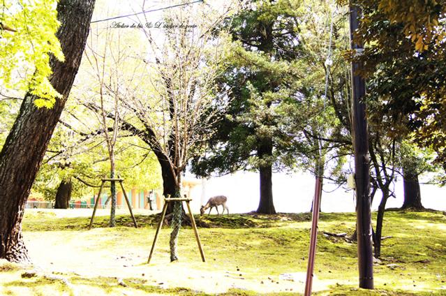 奈良散策のつづきとブックカフェ。_b0365901_11144702.jpg