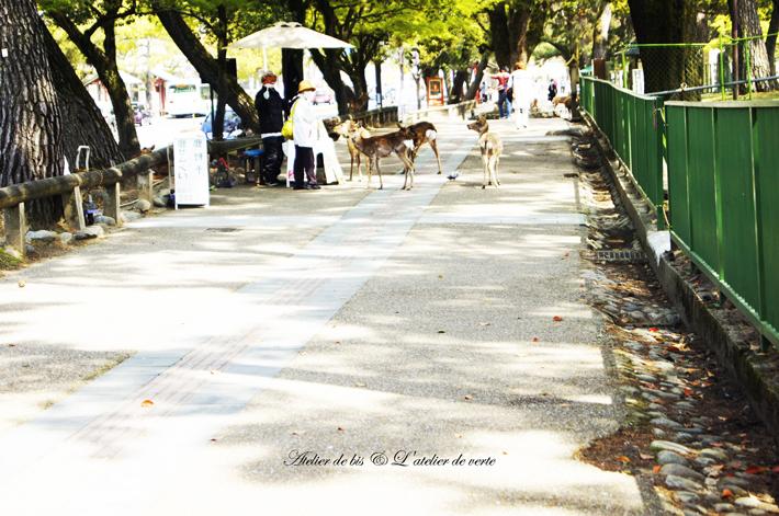 奈良散策のつづきとブックカフェ。_b0365901_11174516.jpg