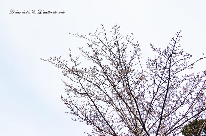 奈良散策のつづきとブックカフェ。_b0365901_11251645.jpg