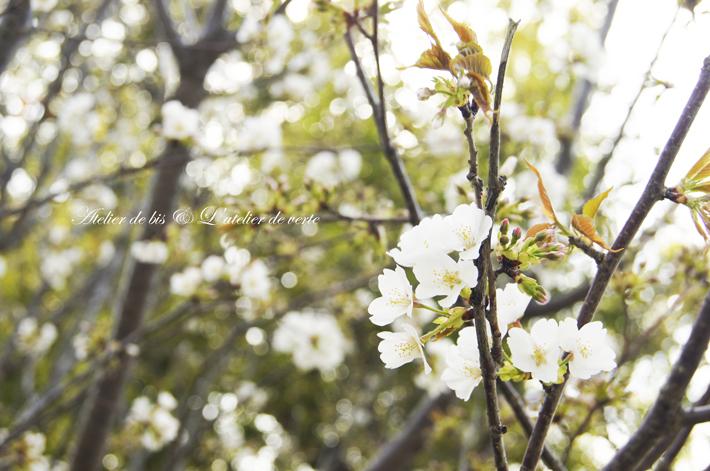 奈良散策のつづきとブックカフェ。_b0365901_11273619.jpg
