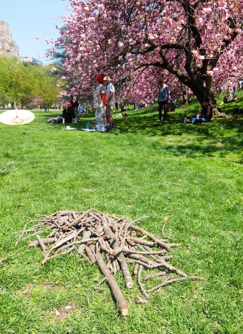 「桜」=「日本文化」ということで・・・_b0007805_03561654.jpg