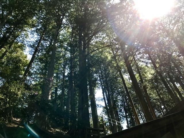 新緑の三峯神社へ②_d0085018_19413653.jpeg