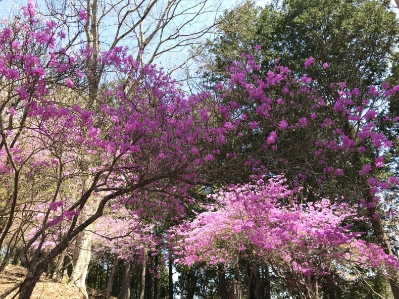 新緑の三峯神社へ②_d0085018_19444869.jpeg