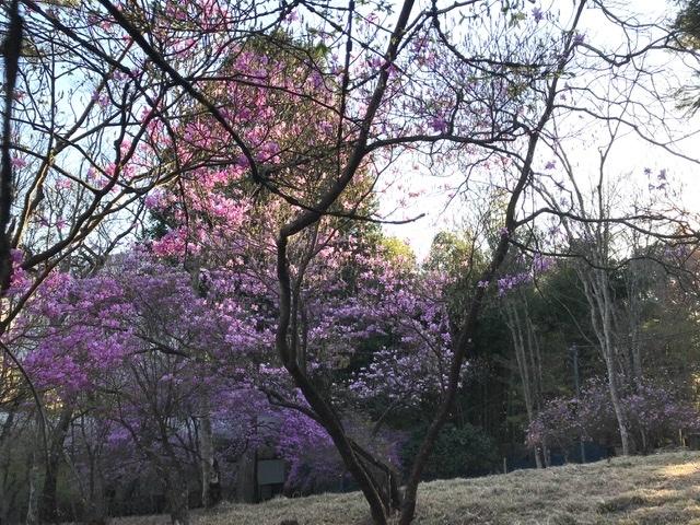 新緑の三峯神社へ①_d0085018_23052192.jpeg
