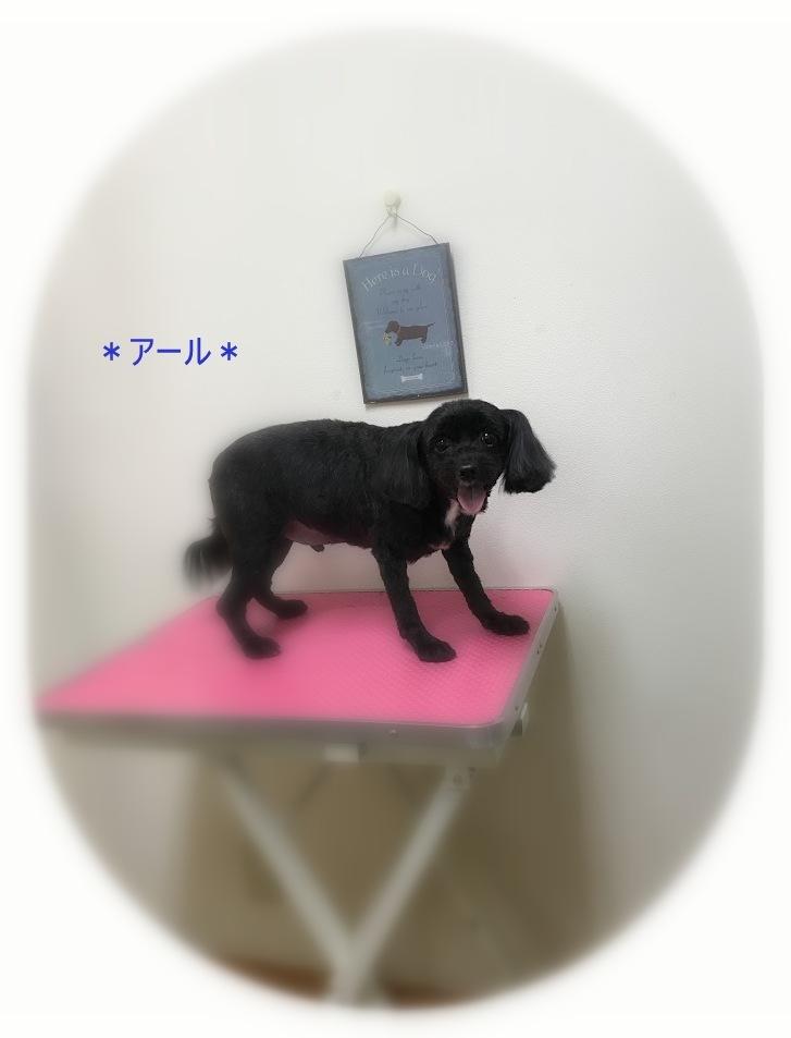 ルークくん&アールくん_a0315823_20392988.jpg