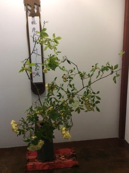 江沼句会(雪垣)と花_f0289632_05570426.jpg