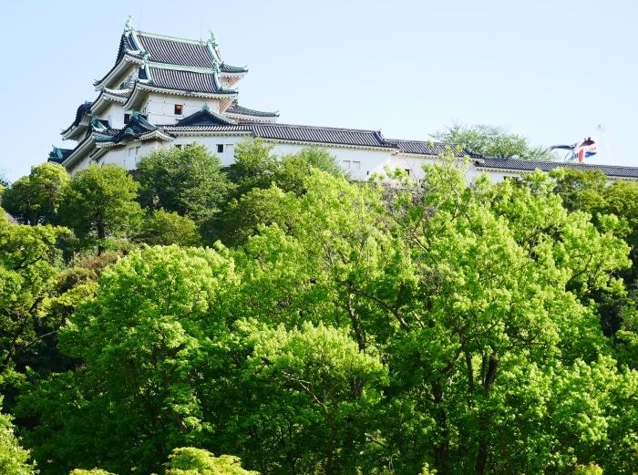 和歌山城の鯉のぼりと西の丸の白爪草  2021-04-30 00:00_b0093754_22434687.jpg