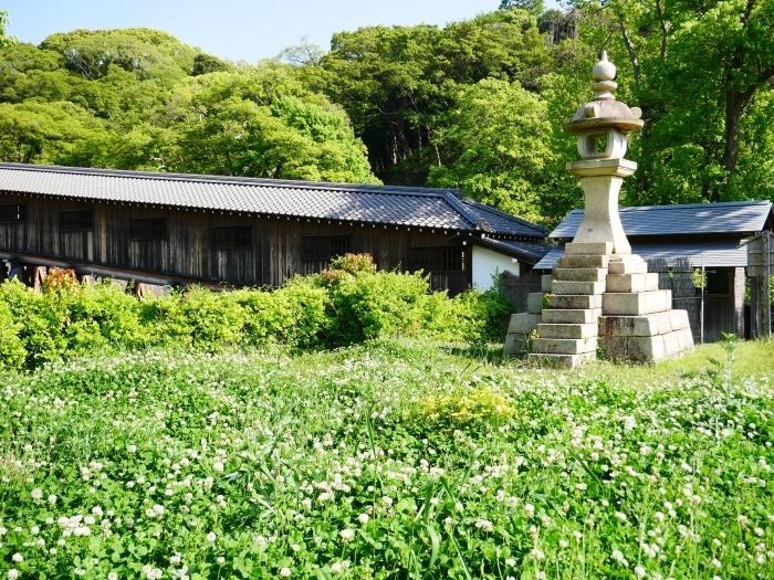 和歌山城の鯉のぼりと西の丸の白爪草  2021-04-30 00:00_b0093754_22442774.jpg