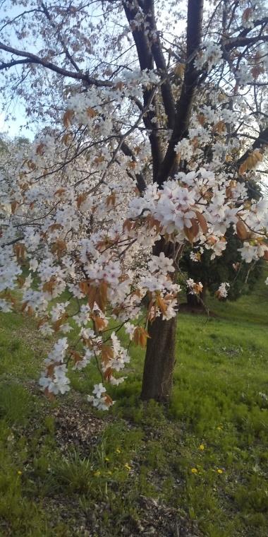 桜_b0185375_13253870.jpg