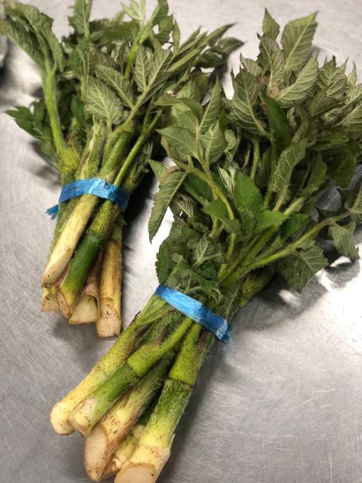 新緑と山菜の季節_d0182179_18001018.jpg