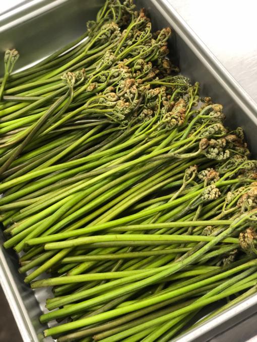 新緑と山菜の季節_d0182179_18001312.jpg