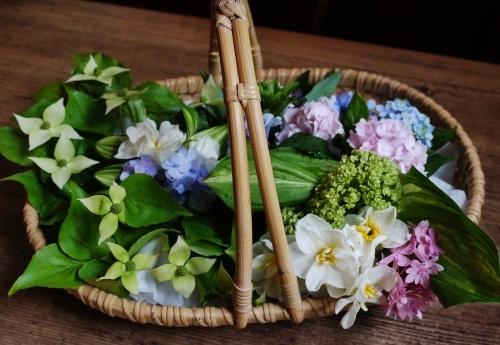 Oさんの お花です♡ 世界で一番かわいくて 賢い子??_e0167795_16223858.jpg