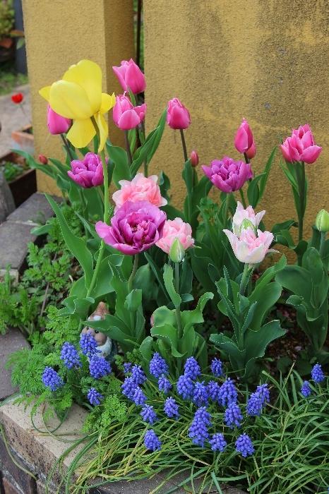 2021年4月の花まとめ_a0309917_12003588.jpg