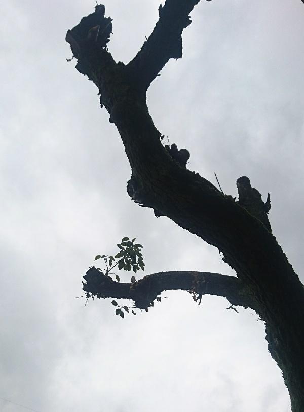 樹の力_b0355531_22053723.jpg