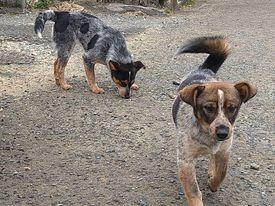 (4/30・追加あり)新規・若い犬2+5,6頭&以前から募集しているプロットの男の子の里親さん、お預かりさん募集しています!!_c0372561_16173210.jpg