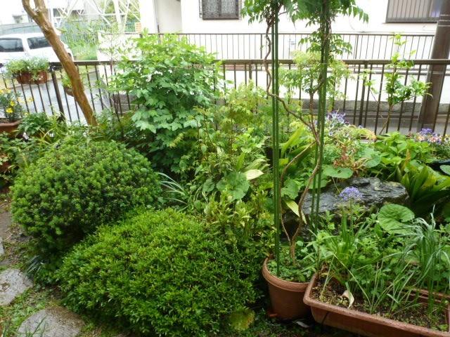 穀雨くる_c0286885_09434778.jpg