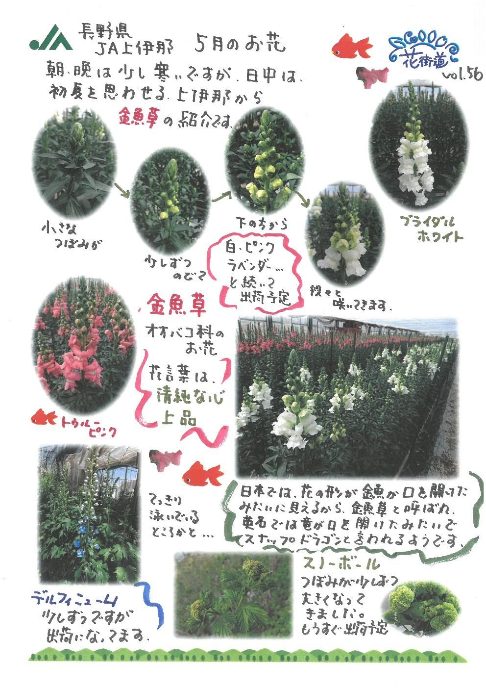 切り花、花木紹介ポップ  vol,56_d0062298_18452854.jpg