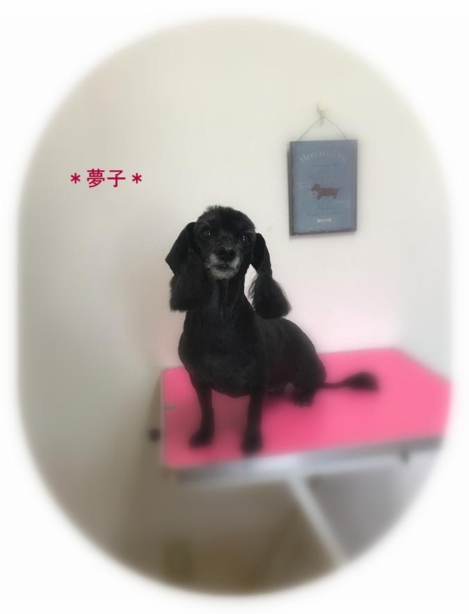 夢子ちゃん_a0315823_19384070.jpg