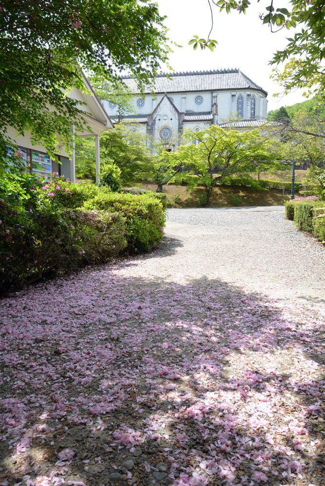 八重桜の絨毯_e0373930_19004360.jpg