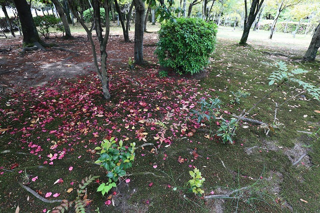 呼松公園   (4月24日)_a0242438_17513084.jpg