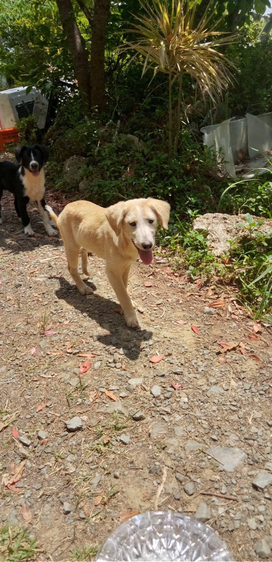 (4/30・追加あり)新規・若い犬2+5,6頭&以前から募集しているプロットの男の子の里親さん、お預かりさん募集しています!!_c0372561_12224572.jpg