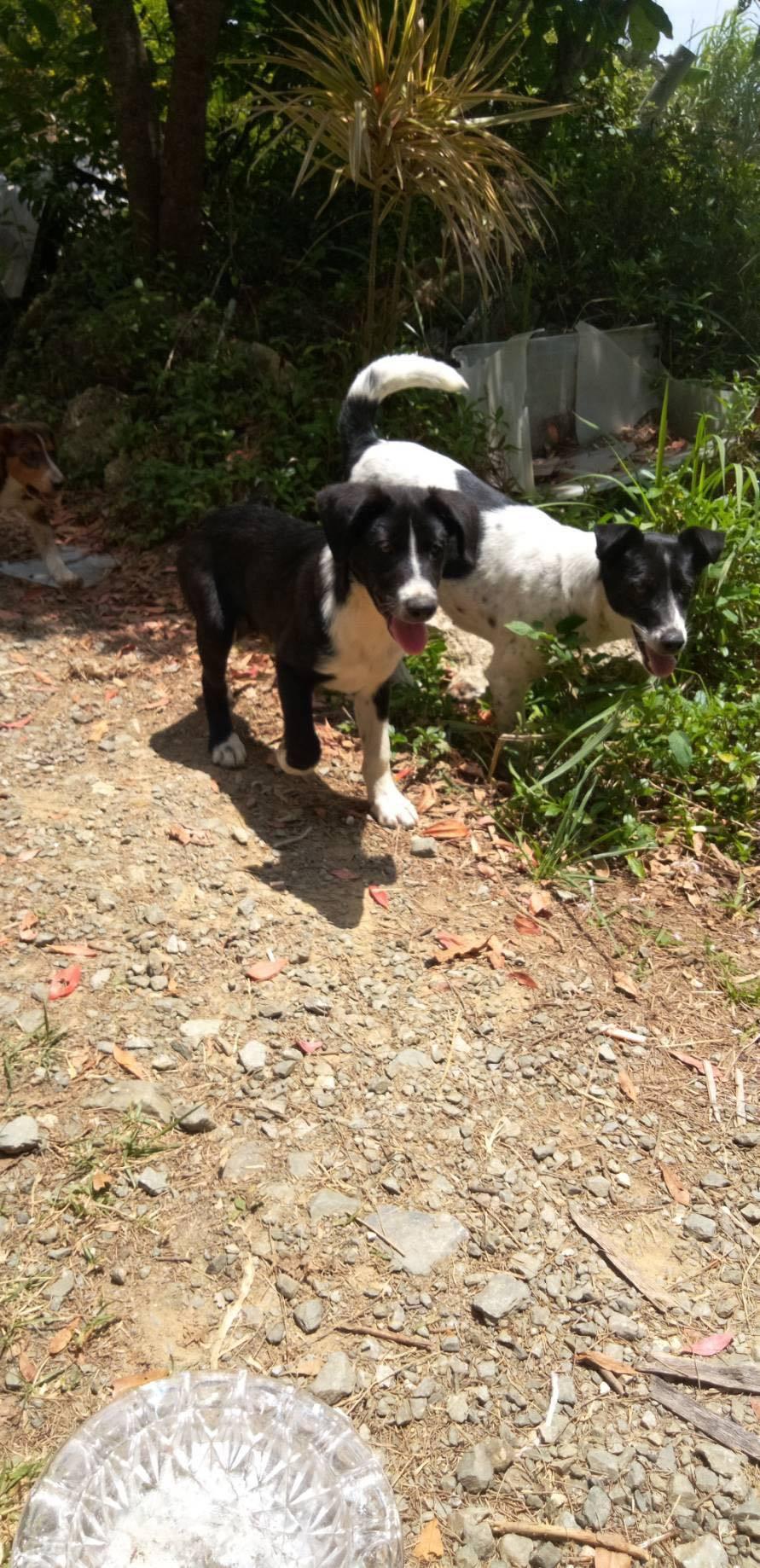 (4/30・追加あり)新規・若い犬2+5,6頭&以前から募集しているプロットの男の子の里親さん、お預かりさん募集しています!!_c0372561_12225493.jpg
