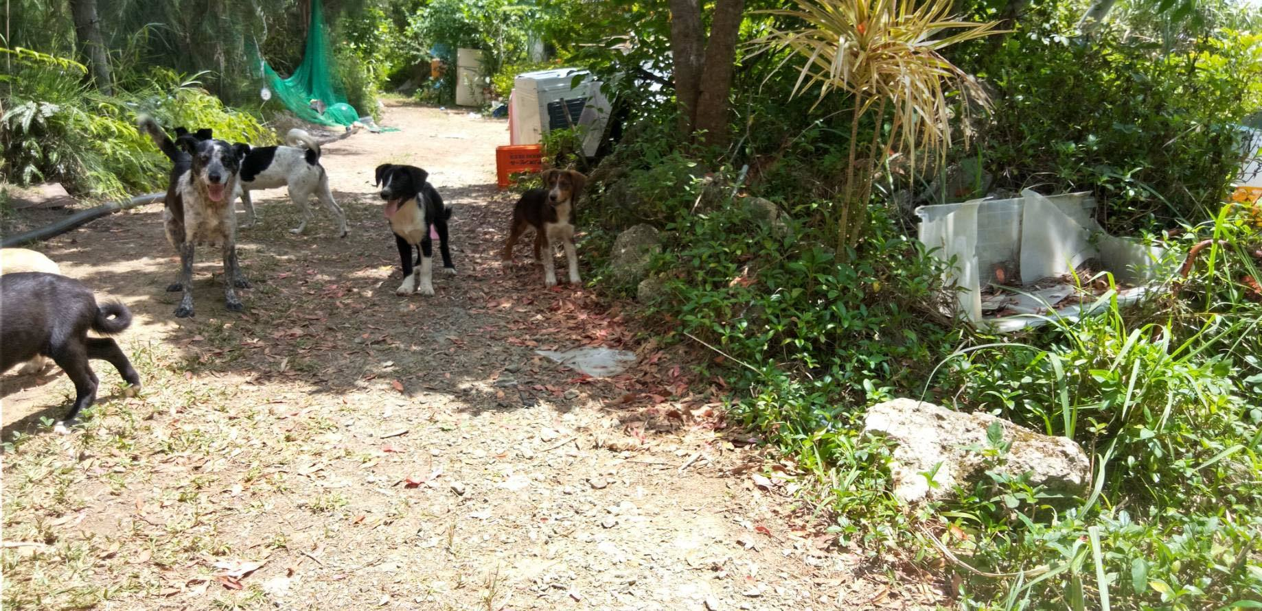 (4/30・追加あり)新規・若い犬2+5,6頭&以前から募集しているプロットの男の子の里親さん、お預かりさん募集しています!!_c0372561_12225931.jpg
