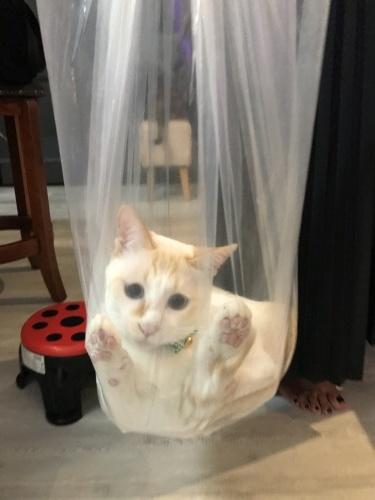 Love the bag._c0153966_21464715.jpeg