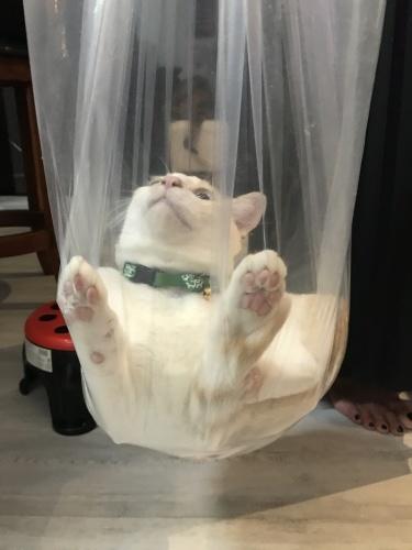 Love the bag._c0153966_21471158.jpeg
