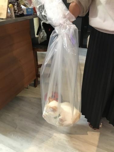 Love the bag._c0153966_21481751.jpeg