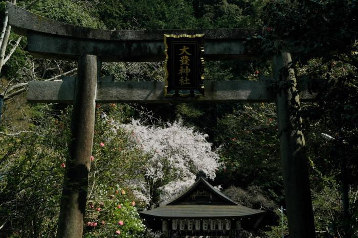 京都 桜 2021_f0021869_21152256.jpg