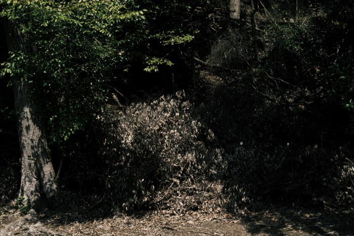 京都 桜 2021_f0021869_21152283.jpg