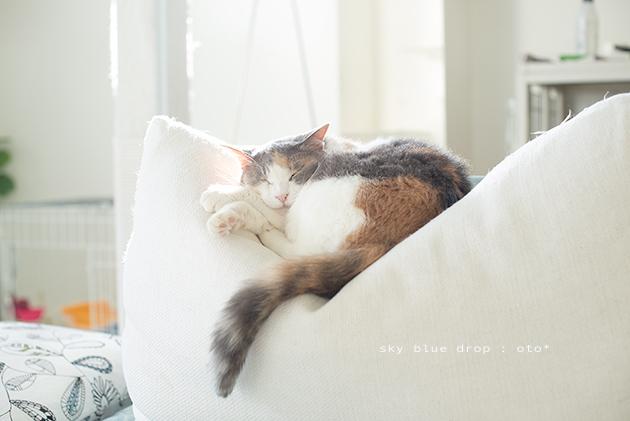 おやすみです - sky blue drop~14ニャンズトネコハウス//