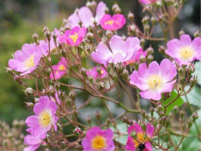 花咲く庭_d0362290_08415665.jpg