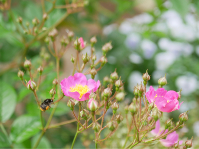 花咲く庭_d0362290_08484198.jpg