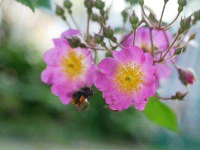 花咲く庭_d0362290_08541731.jpg