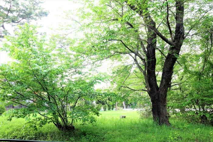 大宮公園に接した カフェ店_d0150720_05260476.jpg