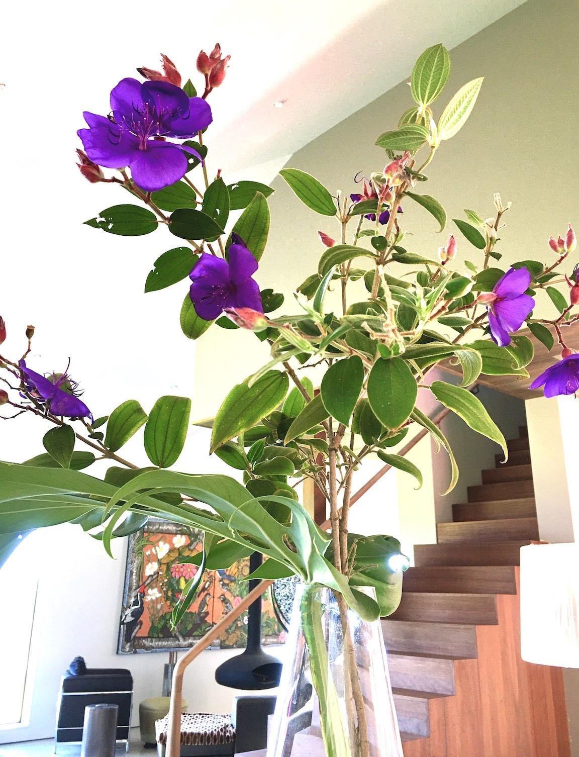 ソーシャルメディアについて思うこと/ May Flowers, Mushrooms, Cookies_e0310424_20085178.jpg