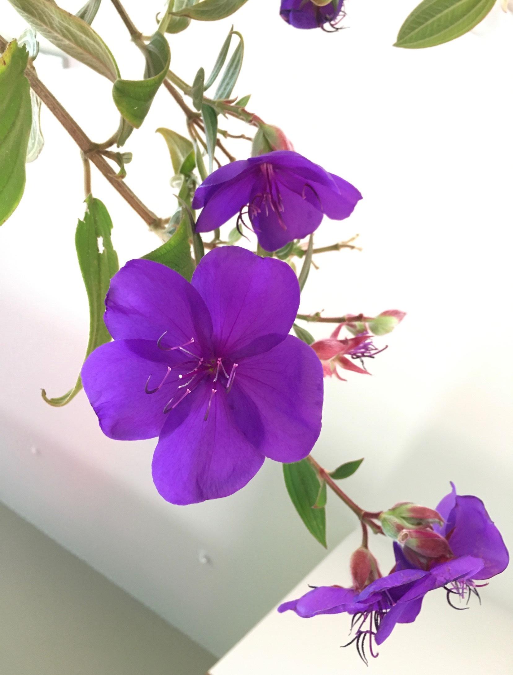 ソーシャルメディアについて思うこと/ May Flowers, Mushrooms, Cookies_e0310424_20085872.jpg