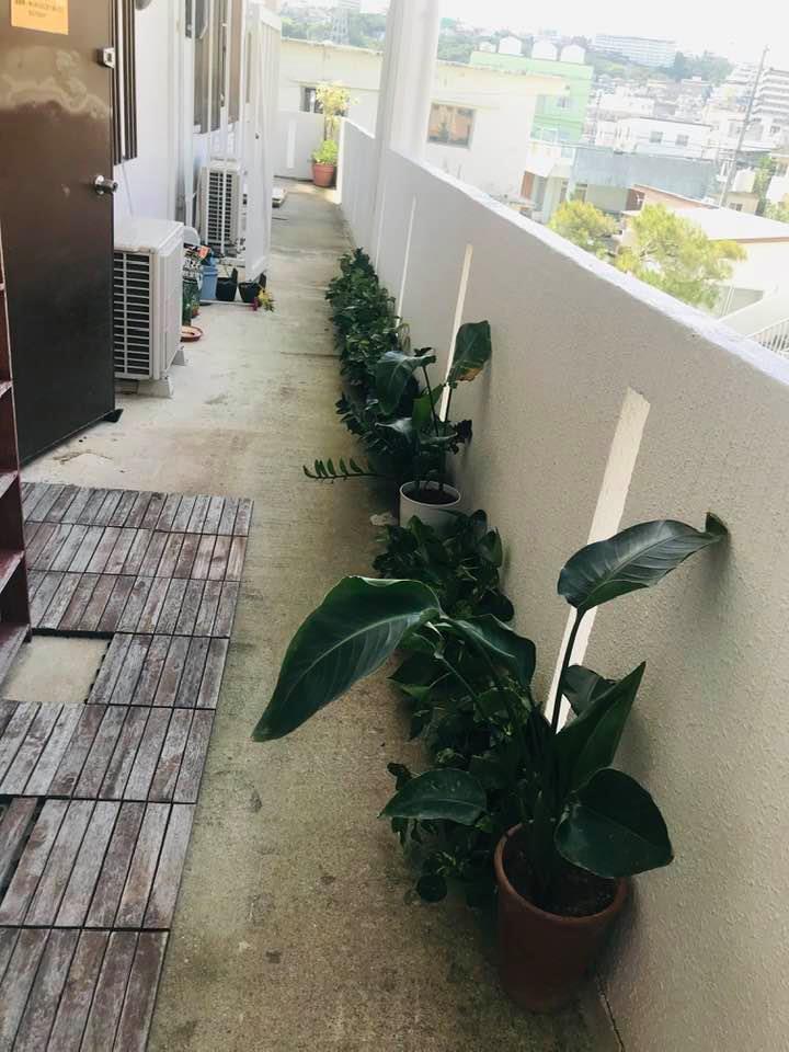 【観葉植物】リフレッシュ☆_b0219726_12525916.jpg