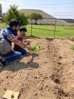 《おやこ楽農くらぶの皆さんへ》サツマイモの苗の植えつけ、完了です!_f0079749_16591007.jpg