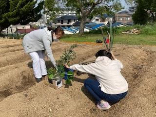 《おやこ楽農くらぶの皆さんへ》サツマイモの苗の植えつけ、完了です!_f0079749_17015501.jpg