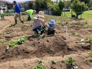 《おやこ楽農くらぶの皆さんへ》サツマイモの苗の植えつけ、完了です!_f0079749_17054220.jpg
