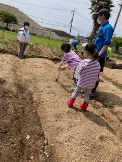 《おやこ楽農くらぶの皆さんへ》サツマイモの苗の植えつけ、完了です!_f0079749_17114690.jpg