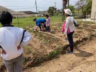 《おやこ楽農くらぶの皆さんへ》サツマイモの苗の植えつけ、完了です!_f0079749_17122768.jpg