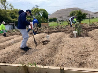《おやこ楽農くらぶの皆さんへ》サツマイモの苗の植えつけ、完了です!_f0079749_17145104.jpg