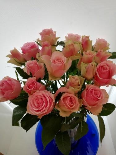 Humのお誕生日_f0324460_17065107.jpg
